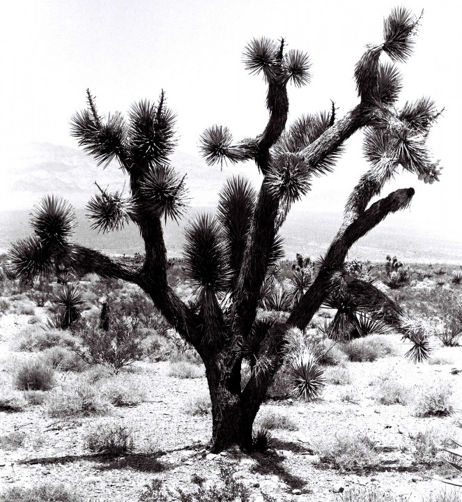 Desert Tree Book