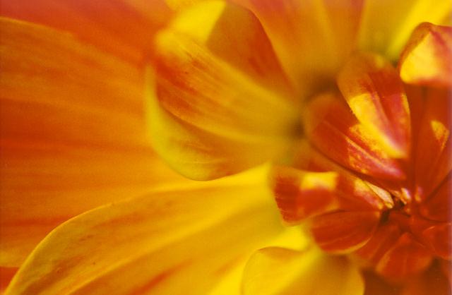 Orange Flower, Photo By Scott Robinson - Lightwork