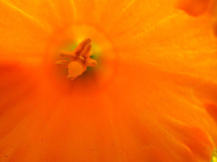 04 Intimate Daffodil 4