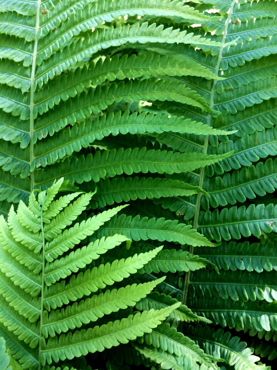 Fronds 04