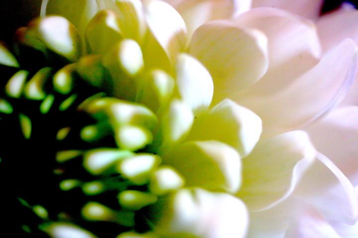 03 Pearl Petals 3