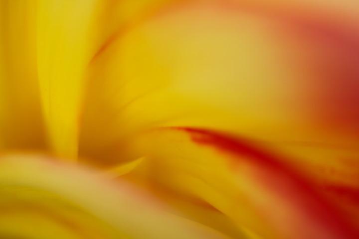 02 Abstract Dahlia 2