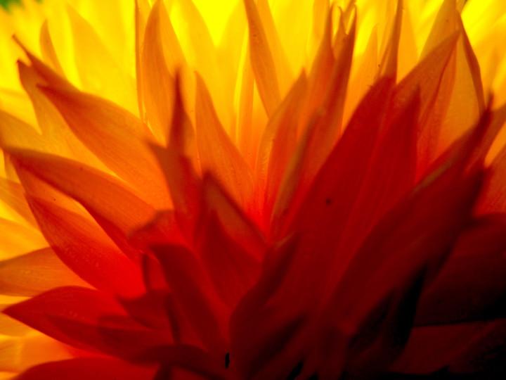 03 a floral Fire 3